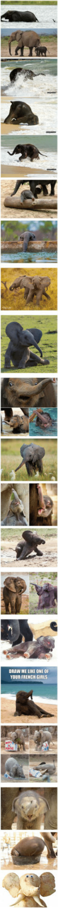 """<p><a href=""""http://laughoutloud-club.tumblr.com/post/160437599742/baby-elephants-that-will-instantly-make-you-smile"""" class=""""tumblr_blog"""">laughoutloud-club</a>:</p>  <blockquote><p>Baby Elephants That Will Instantly Make You Smile</p></blockquote>: DRAW ME LIKE ONE OF  YOUR FRENCH GIRLS <p><a href=""""http://laughoutloud-club.tumblr.com/post/160437599742/baby-elephants-that-will-instantly-make-you-smile"""" class=""""tumblr_blog"""">laughoutloud-club</a>:</p>  <blockquote><p>Baby Elephants That Will Instantly Make You Smile</p></blockquote>"""