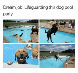 pool-party: Dream job: Lifeguarding this dog pool  party