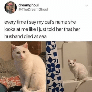 Cats, Dank, and Memes: dreamghoul  @TheDreamGhoul  every time i say my cat's name she  looks at me like i just told her that her  husband died at sea Why u always u do by tarun272003 MORE MEMES