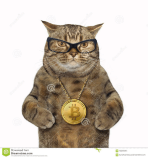Image, Bitcoin, and Cat: dreamstime  reamscime  dreamstime  dmstime  dreamstime  Download from  Dreamstime.com  This watermarked comp image is for previewing purposes only.  ID 122443461  © Iryna Kuznetsova | Dreamstime.com  dreamstime  dreamstime  dreamstime Bitcoin Baller Cat