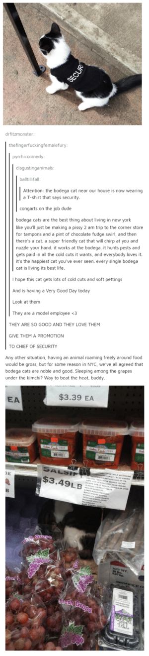 Cats, Dude, and Food: drfitzmonster  thefingerfuckingfemalefury  pyrrhiccomedy  disgustinganimals  balltillifall  Attention: the bodega cat near our house is now wearing  a T-shirt that says security  congarts on the job dude  bodega cats are the best thing about living in new york  like you'll just be making a pissy 2 am trip to the corner store  for tampons and a pint of chocolate fudge swirl, and then  there's a cat. a super friendly cat that will chirp at you and  nuzzle your hand. it works at the bodega. it hunts pests and  gets paid in all the cold cuts it wants, and everybody loves it.  it's the happiest cat you've ever seen. every single bodega  cat is living its best life  I hope this cat gets lots of cold cuts and soft pettings  And is having a Very Good Day today  Look at them  They are a model employee <3  THEY ARE SO GOOD AND THEY LOVE THEM  GIVE THEM A PROMOTION  TO CHIEF OF SECURITY  Any other situation, having an animal roaming freely around food  would be gross, but for some reason in NYC, we've all agreed that  bodega cats are noble and good. Sleeping among the grapes  under the kimchi? Way to beat the heat, buddy  EA  $3.39 EA  3E  $3.49LB A word on bodgea cats