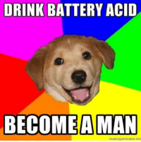 Advice Dog: DRINK BATTERY ACID  BECOME A MAN