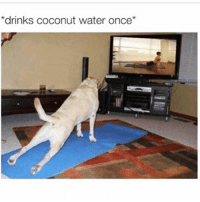 Memes, Water, and Coconut Water: drinks coconut water once