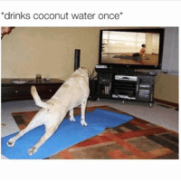 Funny, Memes, and Water: drinks coconut water once SarcasmOnly