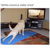 Memes, Coconut Water, and 🤖: *drinks coconut water once We all know people like this. 😒 TheLADBible