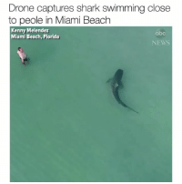 Issa nope for me 🛑 they can have the beach 🏃‍♂️🏃‍♀️🏃‍♂️ Via @abcnews MiamiBeach: Drone captures shark swimming close  to peole in Miami Beach  Kenny Melendez  abc  NEWS  Miami Beach,Florida Issa nope for me 🛑 they can have the beach 🏃‍♂️🏃‍♀️🏃‍♂️ Via @abcnews MiamiBeach