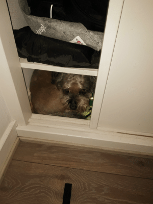 My dog is still a bit nervous from new-years eve, so he hides in the closet at night.: drop  jdoip My dog is still a bit nervous from new-years eve, so he hides in the closet at night.