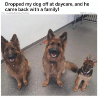 (@hilarious.ted) is hands-down the best page for cute critters on the Gram.: Dropped my dog off at daycare, and he  came back with a family!  Pic: reddit u/EatYourTartOut  @DrSmashlove (@hilarious.ted) is hands-down the best page for cute critters on the Gram.