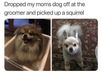 Memes, Moms, and Squirrel: Dropped my moms dog off at the  groomer and picked up a squirrel