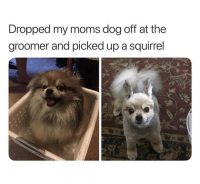 Funny, Memes, and Moms: Dropped my moms dog off at the  groomer and picked up a squirrel This is too funny 😂 @ladbible