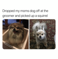 Memes, Moms, and Smh: Dropped my moms dog off at the  groomer and picked up a squirrel  ed groomers be doing the most smh