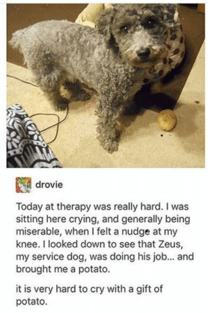Wholesome gift with affection.: drovie  Today at therapy was really hard. I was  sitting here crying, and generally being  miserable, when I felt a nudge at my  knee. I looked down to see that Zeus,  my service dog, was doing his job... an  brought me a potato.  it is very hard to cry with a gift of  potato. Wholesome gift with affection.