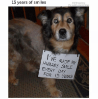 Bless Up, Facebook, and Internet: @DrSmashlove  Pic: reddit u/zanocharge  15 years of smiles  I'VE MADE My  HUMANS SMILE  EVERY DAY  FOR 15 YEARS WELL TODAY U MADE THE ENTIRE INTERNET SMILE U WONDERFUL CREATURE. OK NOT THE ENTIRE INTERNET...SOME PEOPLE AUNTIES AND UNCLES ONLY USE THE INTERNET TO LOG ONTO FACEBOOK AND AGGRESSIVELY DEFEND THE CHEETO IN COMMENT SECTIONS...BUT ALL THE GOOD PEOPLE WHO USE THE INTERNET FOR ITS INTENDED USAGE (MEMES AND PUPPIES 🤗) ARE SMILING BLESS UP 😍😂😂😂