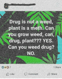 Weed: Drug is not a weed,  plant is a meth Can  u grow weed, can  drug, plant?7? YES.  Can you weed drug?  NO  7  1 Share  u Like  Share  Comment