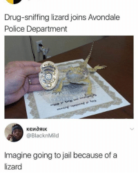 Jail, Police, and Girl Memes: Drug-sniffing lizard joins Avondale  Police Department  @BlacknMild  Imagine going to jail because of a  lizard 🤣😂🤣😂