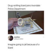 Jail, Memes, and Police: Drug-sniffing lizard joins Avondale  Police Department  @BlacknMild  Imagine going to jail because of a  lizard What would y'all do? 🤔😩😂 https://t.co/hORbN8CO2u