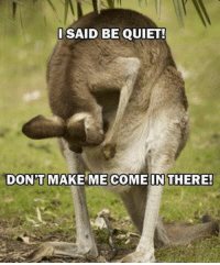 DSAID BE QUIET!  DON'T MAKE ME COME IN THERE! kangaroo