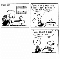 Even better snoopy comics cartoon snoopycomics woodstock: DSNOOPY COMICS  HOW CAN I PRACTICE  WITH A BIRD SITTING  ON MY PIANO?!  3-13  HOW ABOUT A BIRD  AND A DOG Even better snoopy comics cartoon snoopycomics woodstock