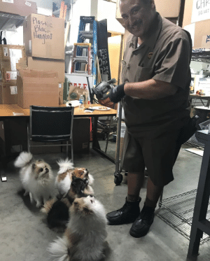ups-dogs:Hi. Here are our poms with our driver. They both look forward to seeing each other everyday. Sharon`: DTLA RE  CREAT ups-dogs:Hi. Here are our poms with our driver. They both look forward to seeing each other everyday. Sharon`