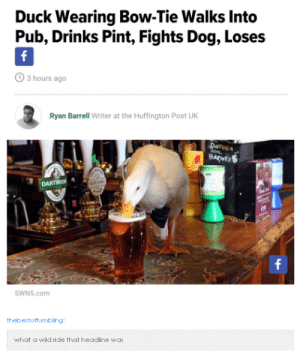 News, Omg, and Tumblr: Duck Wearing Bow-Tie Walks Into  Pub, Drinks Pint, Fights Dog, Loses  3 hours ago  Ryan Barrell Writer at the Huffington Post UK  Doteea  SWNS.com  thebestoftumbling  what a wild ride that headline was In other news #2omg-humor.tumblr.com