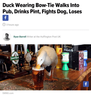 Huffington: Duck Wearing Bow-Tie Walks Into  Pub, Drinks Pint, Fights Dog, Loses  3 hours ago  Ryan Barrell Writer at the Huffington Post UK  Doteea  BARNE  DARTMOOR  SWNS.com