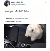 Follow @pubes , they will genuinly make you laugh 😂: ducky boy  @eatjaredtweets  i love you Mash Potato  Aww Club @awwcuteness  Meet Mash Potato... Follow @pubes , they will genuinly make you laugh 😂