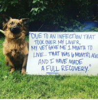 "Live, Proud, and Doggo: DUE TO AN INFECTION THAT  MY VET GAVE ME 1 MONTH TO  AND T HAVE MADE  TOOK OVER MY LIVER  LIVE. THAT WAS ( MONTHS AG0  A FULL RECOVERY <p>Proud doggo. via /r/wholesomememes <a href=""https://ift.tt/2MfqY32"">https://ift.tt/2MfqY32</a></p>"
