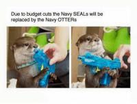 times are tough for the U.S. military: Due to budget cuts the Navy SEALs will be  replaced by the Navy OTTERs times are tough for the U.S. military