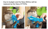 """Memes, Otters, and Budget: Due to budget cuts the Navy SEALs will be  replaced by the Navy OTTERs <p>Due to budget cuts the Navy SEALs will be replaced by the Navy OTTERs via /r/memes <a href=""""http://ift.tt/2AduTw2"""">http://ift.tt/2AduTw2</a></p>"""