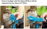 Y'know what, Im happy with the shutdown.: Due to budget cuts the Navy SEALs will be  replaced by the Navy OTTERs Y'know what, Im happy with the shutdown.