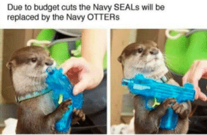 positive-memes:  Bestest water bois: Due to budget cuts the Navy SEALs will be  replaced by the Navy OTTERs positive-memes:  Bestest water bois