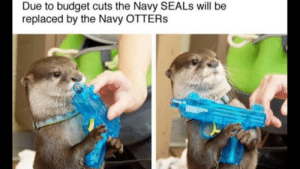 I feel so safe: Due to budget cuts the Navy SEALS will be  replaced by the Navy OTTERS I feel so safe
