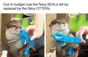 He's ready for war: Due to budget cuts the Navy SEALS will be  replaced by the Navy OTTERS He's ready for war