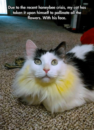 Taken, Tumblr, and Blog: Due to the recent honeybee crisis, my cat has  taken it upon himself to pollinate all the  flowers. With his face. lolzandtrollz:Nature Will Always Find A Way
