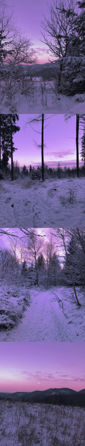 duettaeann:Cotton candy winter sky: duettaeann:Cotton candy winter sky