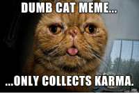 Karma catillion suggests you make an honest contribution to this karma pile.: DUMB CAT MEME  ONLY COLLECTS KARMA  made on ingur Karma catillion suggests you make an honest contribution to this karma pile.