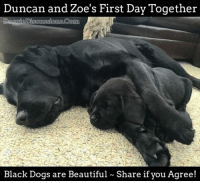 💕 DoggieDiscussions.Com 💕: Duncan and Zoe's First Day Together  Daggie Discussions Corn  Black Dogs are Beautiful Share if you Agree! 💕 DoggieDiscussions.Com 💕