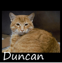 Memes, Flea, and 🤖: Duncan *Please note this animal is not with AAVA - we are networking for rescue as the liaison for the shelter* This baby is in a kill shelter in Abbeville, LA which does not allow public adoptions. Animals must be pulled by an approved rescue or can be adopted through AAVA.  TO ADOPT - fill out an application at http\://aavarescue.com/adoptions.php  RESCUES - all rescues must now go through AAVA. Please contact us at animalaidvermilion@gmail.com. If you are not already approved please fill out a rescue application at http\://aavarescue.com/rescues.php  TO FOSTER - fill out an application at http\://aavarescue.com/volunteer.php  If you have any questions please contact us at animalaidvermilion@gmail.com or (337) 366-0212 or visit our website http\://aavarescue.com for more information.  To donate to AAVA's general rescue fund which helps support the shelter animals needs visit this link paypal.me/animalaidvermilion or visit our website http\://aavarescue.com/support-our-rescue.php Shelter needs can include items such as laundry detergent, baby pools, flea medication, dawn soap, heaters and fans, toys, gas for transports, pull fees for unfunded animals and other types of items.