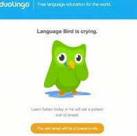 Duolingo: duolingO Free language education for the world.  Language Bird is crying.  Learn Italian today or he will eat a poison  loaf of bread.  The next email will be a funeral e-vite