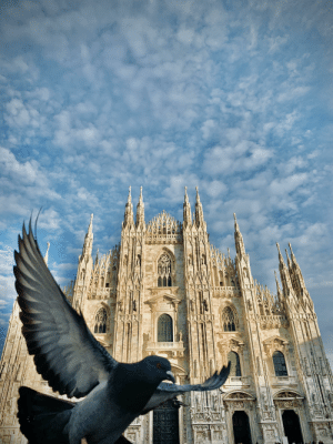 Duomo Di Milano (had to mess around with the filters a bit to bring out the dove): Duomo Di Milano (had to mess around with the filters a bit to bring out the dove)
