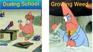 I've never related to a picture in my life like I relate to this: During School  Growing Weed I've never related to a picture in my life like I relate to this