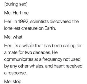 Memes, Sex, and Been: [during sex]  Me: Hurt me  Her: In 1992, scientists discovered the  loneliest creature on Earthh  Me: what  Her: Its a whale that has been calling for  a mate for two decades. He  communicates at a frequency not used  by any other whales, and hasnt received  a response  Me: stop Hurt me. via /r/memes https://ift.tt/2Lm59xZ