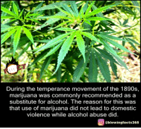 Marijuana: During the temperance movement of the 1890s,  marijuana was commonly recommended as a  substitute for alcohol. The reason for this was  that use of marijuana did not lead to domestic  violence while alcohol abuse  did  O @blowingfacts365