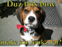 Duz this bow  make me look-ER?  make nmite  made at warofthecute.com Duz this bow make me look fat?          BOL   #dog