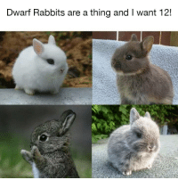 Funny, Dwarf, and Rabbits: Dwarf Rabbits are a thing and I want 12!