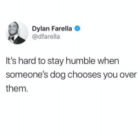 Hair, Humble, and Girl Memes: Dylan Farella  @dfarella  It's hard to stay humble when  someone's dog chooses you over  them *flips hair*