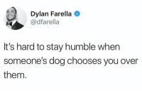 Such a good feeling! https://t.co/5s3k4m81tp: Dylan Farella  @dfarella  It's hard to stay humble when  someone's dog chooses you over  them Such a good feeling! https://t.co/5s3k4m81tp