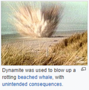 "Advice, Too Much, and Tumblr: Dynamite was used to blow up a  rotting beached whale, with  unintended consequences. lesbianshepard:  lesbianshepard: what….what did they think would happen? highlights from this wiki page for this George Thornton, the engineer in charge of the operation, told an interviewer that he wasn't sure how much dynamite would be needed, explaining that he was chosen to remove the whale because his supervisor had gone hunting.    A charge of half a ton of dynamite was selected.     A military veteran with explosives training who happened to be in the area warned that the planned twenty cases of dynamite was far too much – 20 sticks would have sufficed – but his advice went unheeded     Only some of the whale was disintegrated; most of it remained on the beach for the Oregon Highway Division workers to clear away  Scavenger birds, who it had been hoped would eat the remains of the carcass after the explosion, did not appear as they were possibly scared away by the noise    The explosives-expert veteran's brand-new automobile, purchased during a ""Get a Whale of a Deal"" promotion in a nearby city, was flattened by a chunk of falling blubber  Thornton was promoted to the Medford office several months after the incident"
