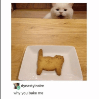 I am here for cookie cat - Max textpost textposts: dynastylnoire  why you bake me I am here for cookie cat - Max textpost textposts