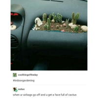 """A Dream, Tumblr, and Greyhound: e 195U  coolthingoftheday  #indoor gardening  xeduo  when ur airbags go off and u get a face full of cactus I had a dream where I was on a greyhound because I used ride them from las Vegas to Los Angeles all the time and it drove us to this neighborhood where all the houses looked the same .. Just plain white with a green yard.. And we stopped at a classy joint hotel with a weird name that I don't remember but it was like """"Pestilence"""" or something and inside I met this guy who was one of those new yorkas that was like """"ayee fo'get about it"""" and I really hated him because he reminded my of danny from the Mindy show and without spoilas he can just go choke"""